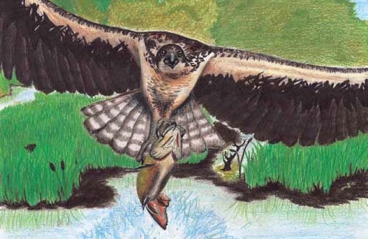 Flying Against the Wind bird flying
