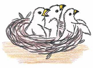 The Sparrow little birds