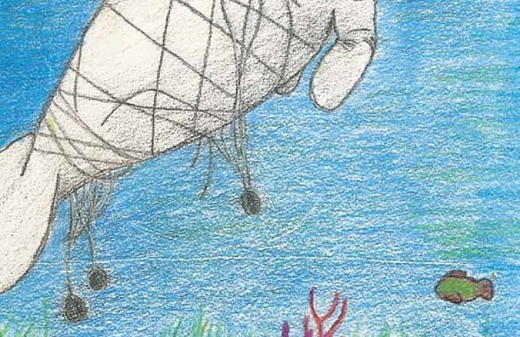 The Chesapeake Bay Manatee caught in the net