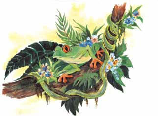The Island of Mysteries frog in a branch
