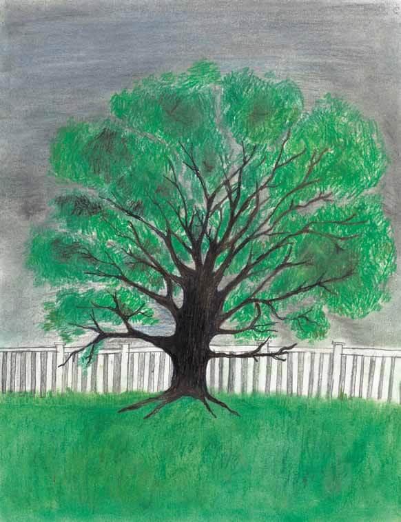 Logs oak tree