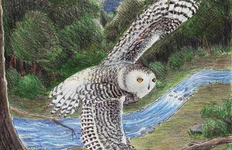 Midnight's Song bird flying