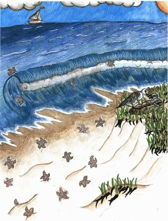Starfish sea shore