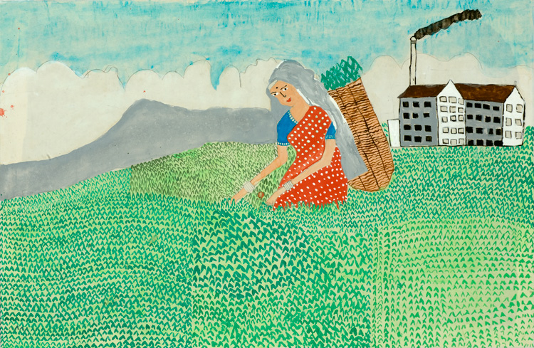 Harvesting Tea, by Achinda Siriwardena, age 7, Sri Lanka