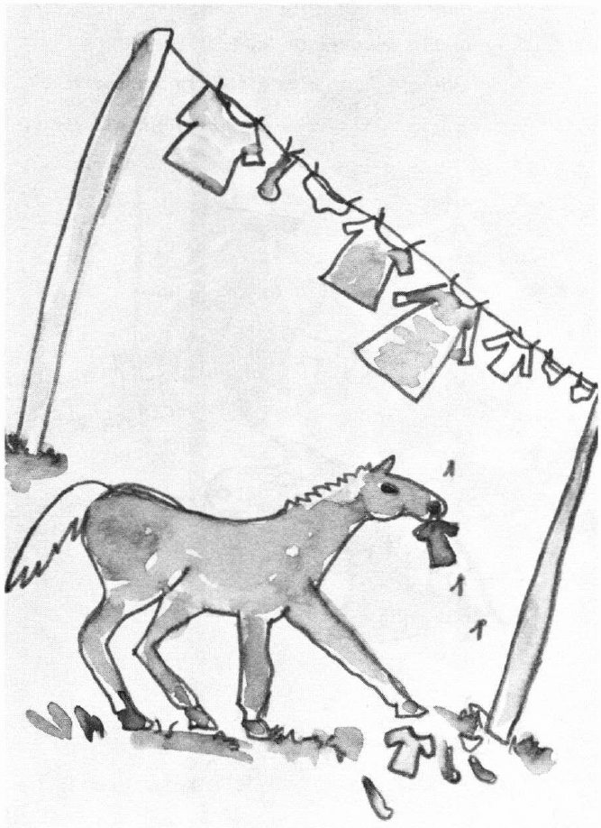 The Adventures of Pumpkin and Seegartus pony at the clothes line