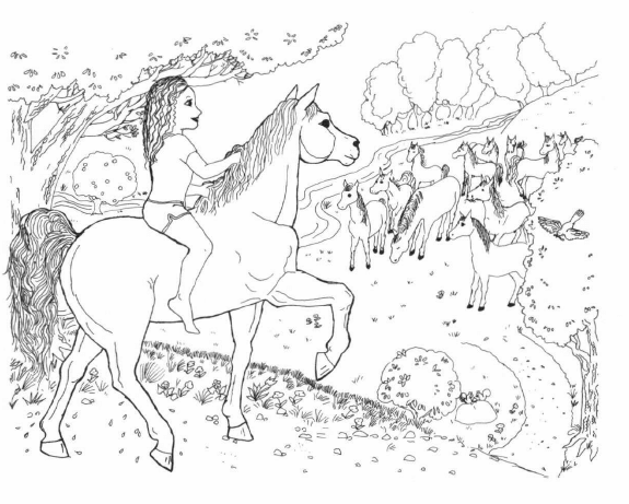 Princess and the Island Stallion seeing several horses
