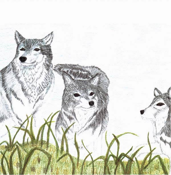 the lone wolf three wolves