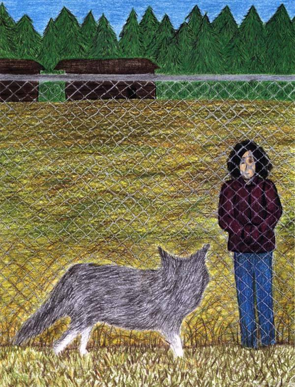 the lone wolf wolf outside the fence