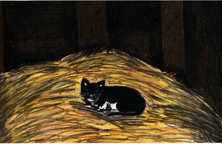 oreo black and white cat
