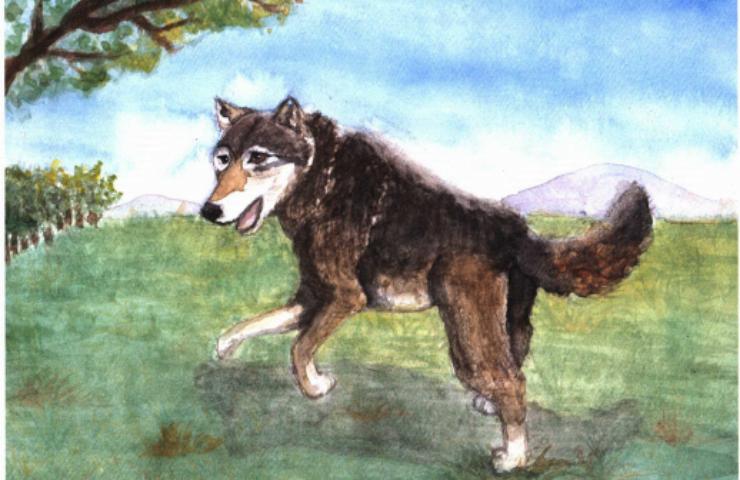 Wolf Hunter a lone wolf