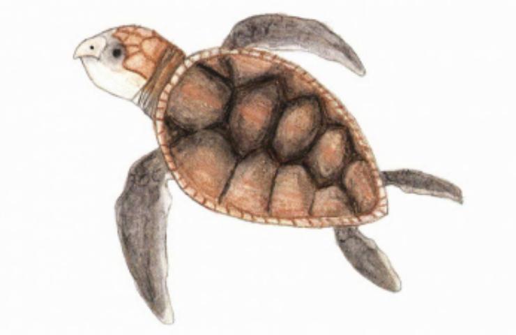 Surprises at Sunrise turtles