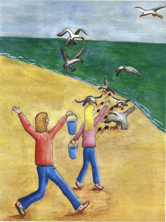Surprises at Sunrise turtles at the beach