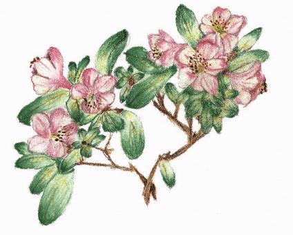 A Bouquet flowers