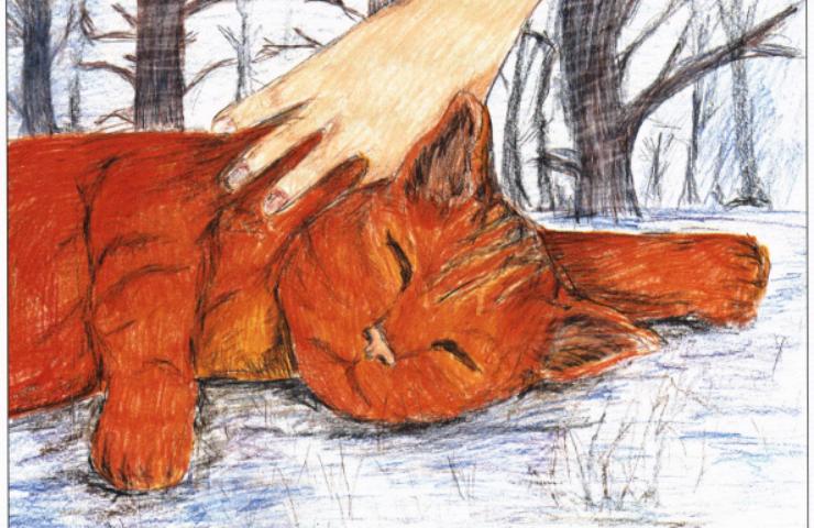 Creamsicle sleeping orange cat