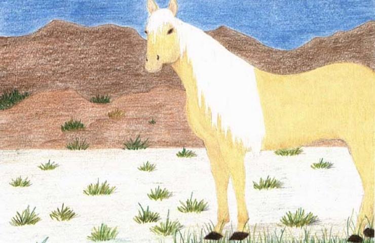 Emilys Mustang bright beautiful horse