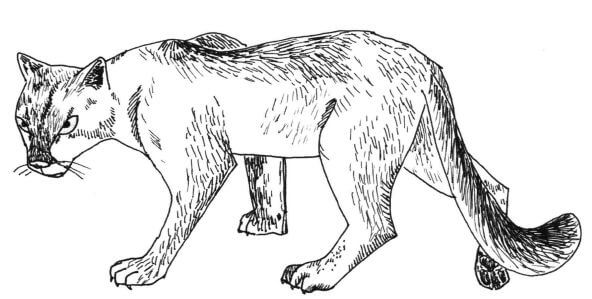 Just Another Cat drawing of cougar