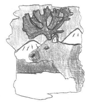 Lakota a caribou