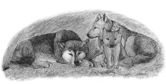 Enchantment of the Wolves pack of wolves