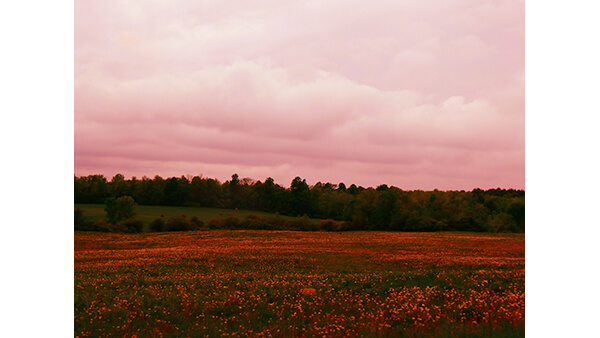 A Field at Sunset  By Hannah Parker