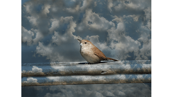Bird in the Clouds